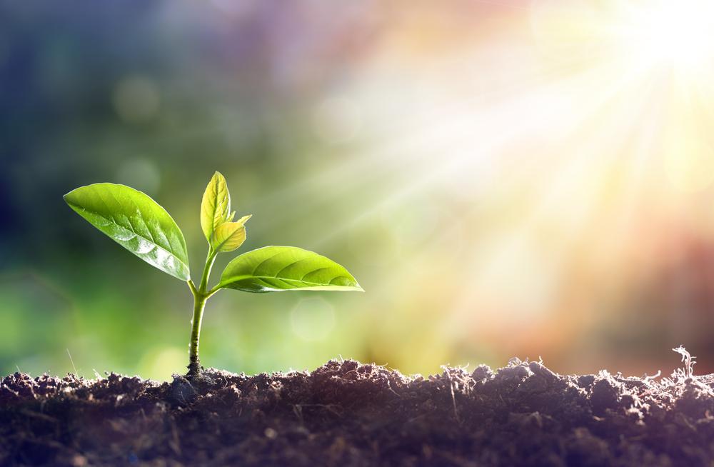 Bio Luftpolsterfolien zum Schutz der Umwelt und Ihrer Waren